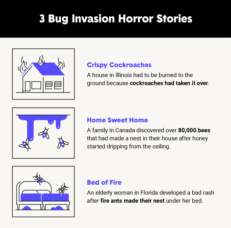 bug-invasion-horror-stories.png