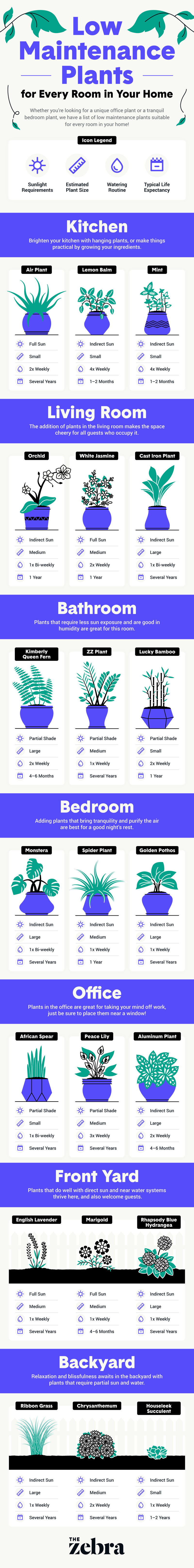 easy to take care of houseplants infographic